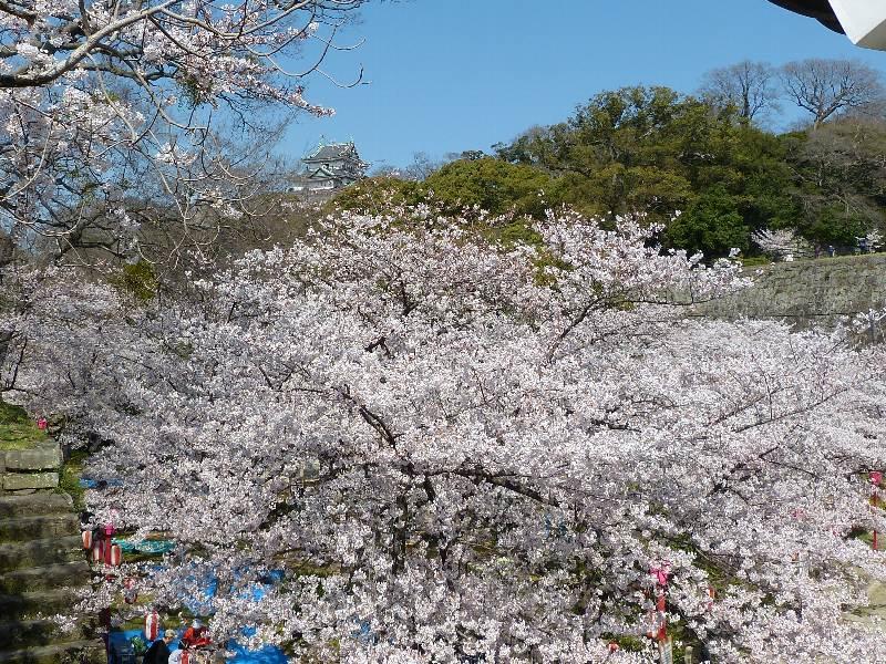Wakayama1_3